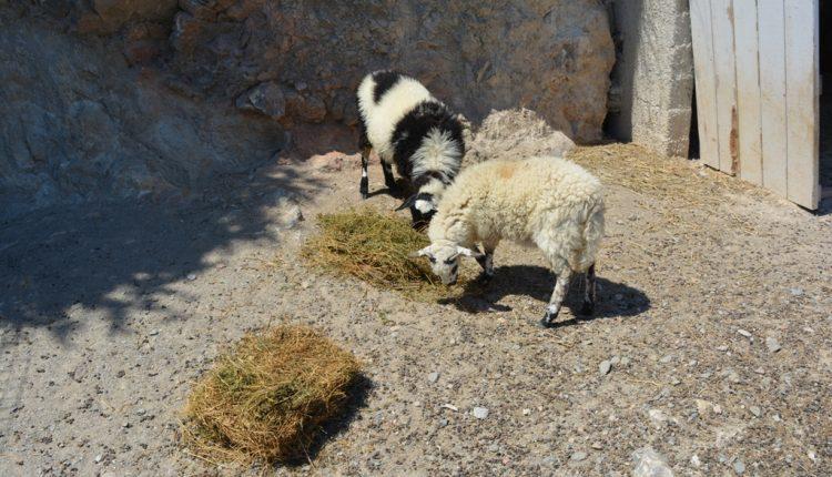 Απλοποιούνται διαδικασίες στην κτηνοτροφία