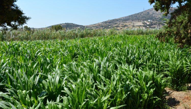 Πληρωμή ενισχύσεων βιολογικής γεωργίας