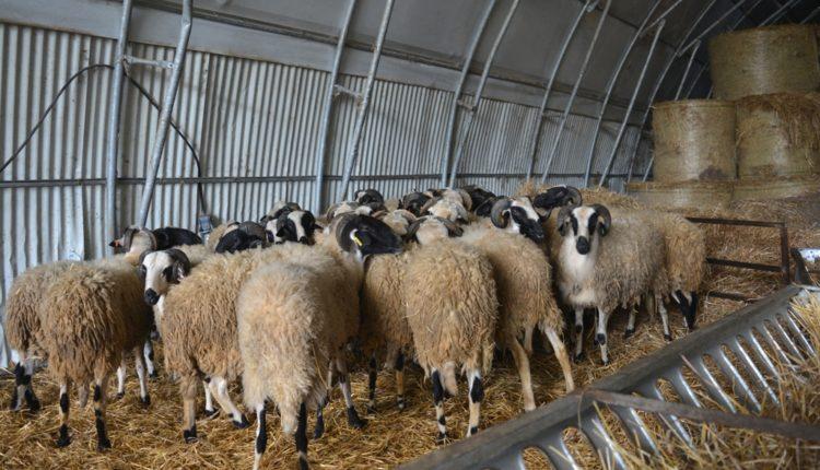 Συμπόσιο για την αιγοπροβατοτροφία στην Ζωοτεχνία