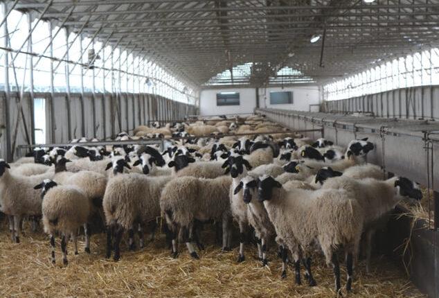 ΣΕΚ: Ζητά γενναία ρύθμιση χρεών κτηνοτρόφων/πτηνοτρόφων