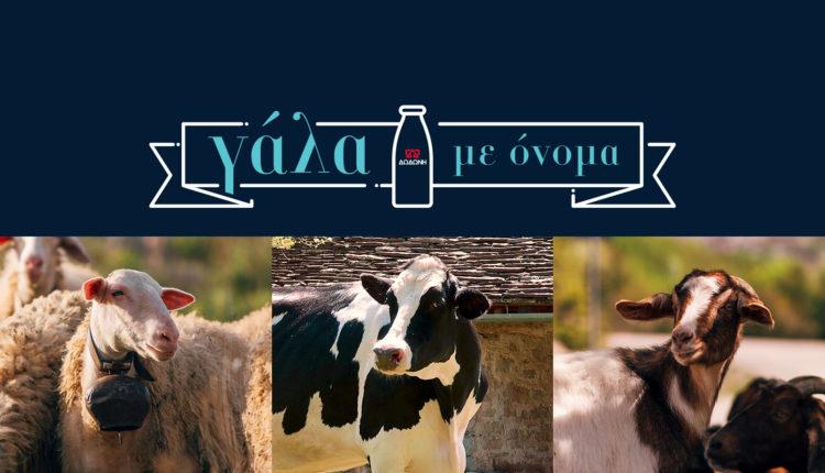 Η Δωδώνη γιορτάζει την Παγκόσμια Ημέρα Γάλακτος