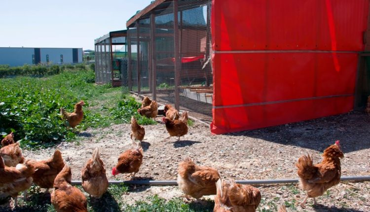 Ιδρύθηκε Εθνική Διεπαγγελματική Οργάνωση Πτηνοτροφίας