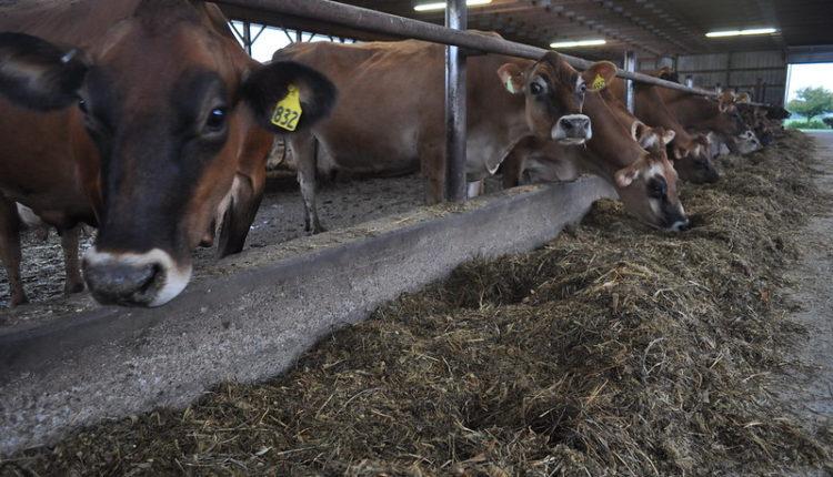 COVID-19   Οι ζωοτροφές θεωρούνται «βασικά προϊόντα» στην ΕΕ