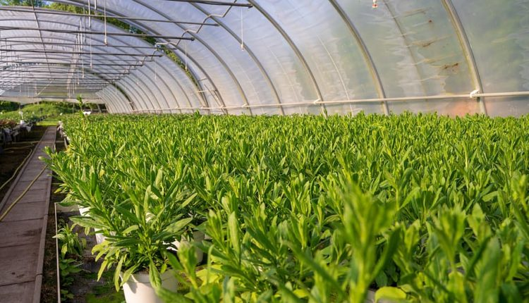 «Αγροανέλιξη»: Επιταχυντής αγροδιατροφικών επιχειρήσεων