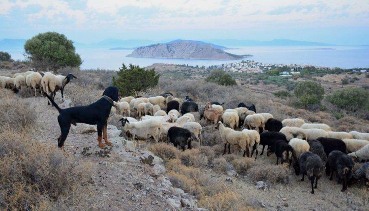 Οι κτηνοτρόφοι δεν είναι πληβείοι, απαιτούν σεβασμό