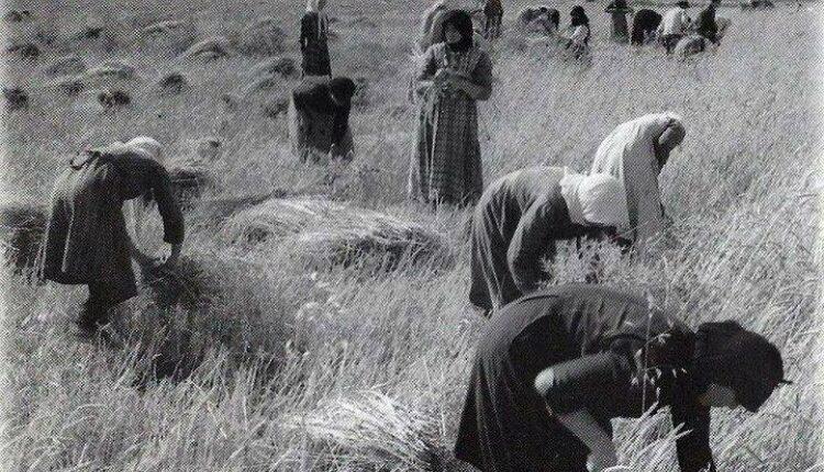 Γιορτάστηκε η Ημέρα Ελληνίδας Αγρότισσας